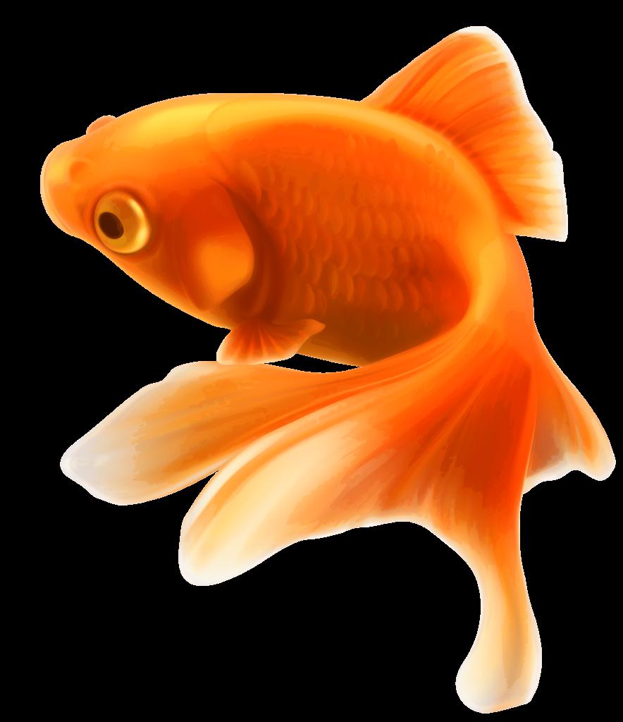 """17.04.2018 – TINDER  ALELUJA! jeb Tinder jūras """"zelta zivtiņas"""""""